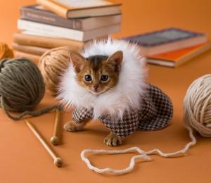etsy-cat