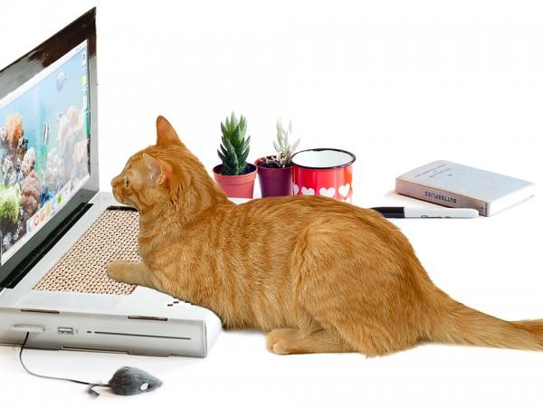 chat-clavier-ordinateur