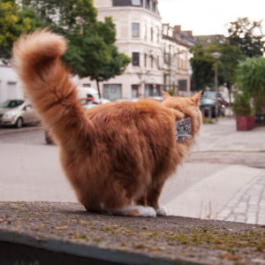 cat-exploit