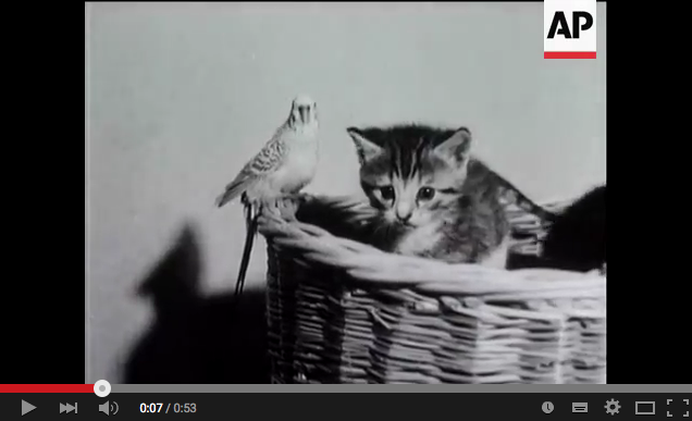 AP-YouTube-LOLCats