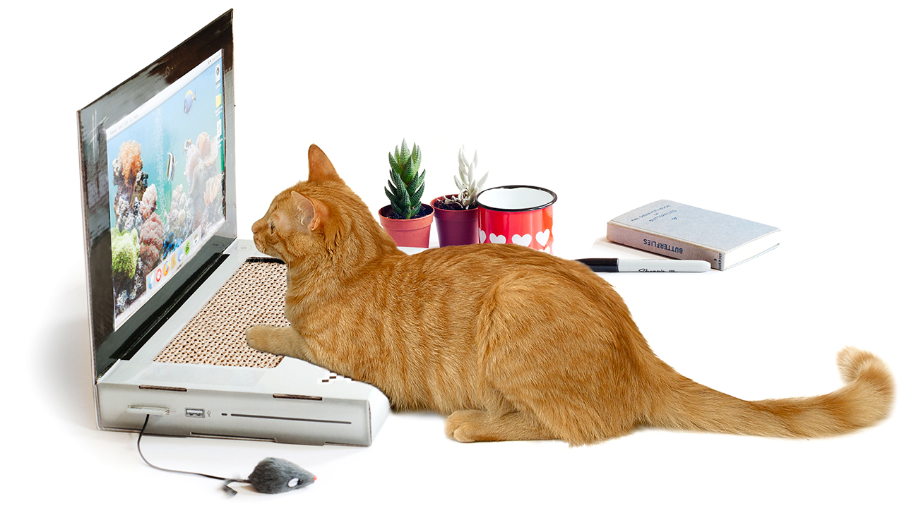 chat-clavier-ordinateur