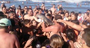 Dolphin-argentina